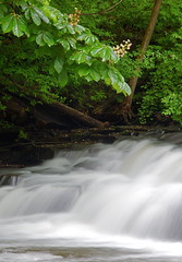 Horse Chestnut Outreach (+David+) Tags: tree waterfall horsechestnut corbettsglen postcardfalls