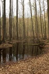 The forest near lake Liepnitz