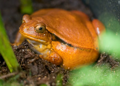 """Van2011 - aquar - yellow toad • <a style=""""font-size:0.8em;"""" href=""""http://www.flickr.com/photos/30765416@N06/5797590783/"""" target=""""_blank"""">View on Flickr</a>"""