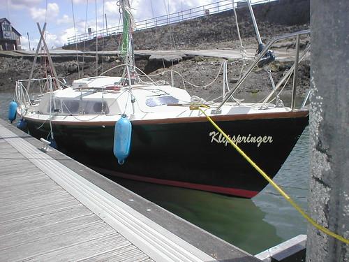 Klipspringer on the pontoon