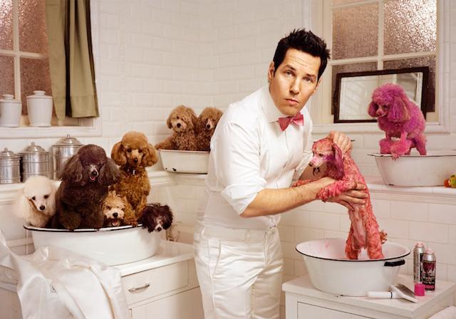 Honeysuckle + Watermelon + Pink 2 - paul rudd+pink poodles