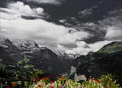 Wenn Weie Wolken Wandern ber 's Tal  ..... (*Lie ... on & off ... too busy !) Tags: flowers blue red white mountains alps clouds switzerland wolken blumen poppies wildflowers bergen alpen nuages wengen hdr bloemen tal berneroberland jungfrauregion klaprozen selectivecolours vallei wildebloemen kantonbern selectievekleuren