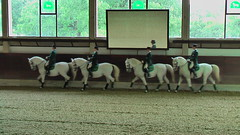 "Lipizzaner Dressage <a style=""margin-left:10px; font-size:0.8em;"" href=""http://www.flickr.com/photos/64637277@N07/5890338979/"" target=""_blank"">@flickr</a>"