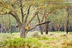 "PhotoFly Travel Club Kenya Safari 2011! • <a style=""font-size:0.8em;"" href=""http://www.flickr.com/photos/56154910@N05/5892979322/"" target=""_blank"">View on Flickr</a>"