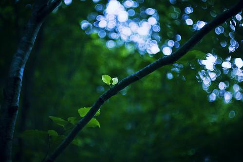 フリー写真素材, 自然・風景, 樹木, 森林, グリーン,