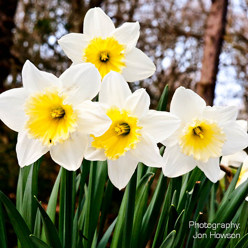 Ecclesall Woods Flowers-5.jpg