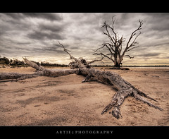 The Fallen :: HDR (:: Artie | Photography ::) Tags: trees sunset lake tree nature photoshop canon dead scenery view desert cs2 cloudy branches tripod australia wideangle vegetation adelaide sa dried 1020mm southaustralia hdr bonney artie uproot 3xp sigmalens photomatix tonemapping tonemap lakebonney 400d rebelxti