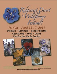 This Weekend is the Ridgecrest Wildflower Festival...