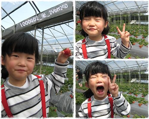 B1000402_採草莓_2y6m25d_05.JPG