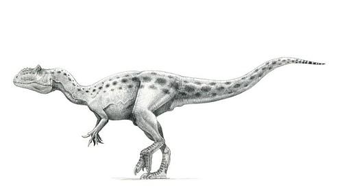 Allosaurus (Saurophaganax) maximus