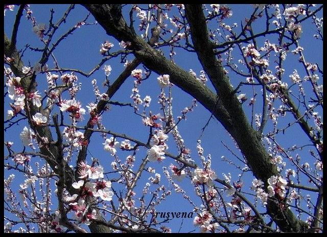 bahar çiçekleri 2