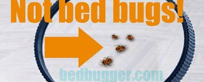 EPA not bedbugs 2