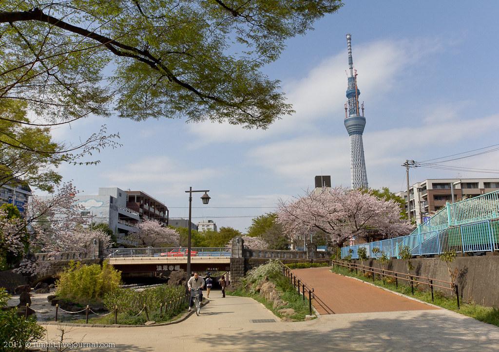 Tokyo Ryogoku Sakura 12
