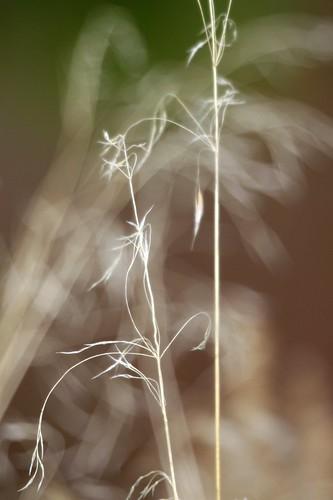 grass-spirits