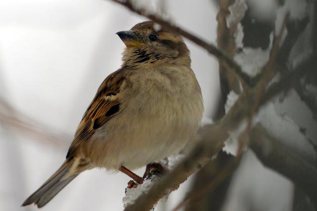 last storm sparrow