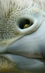 Narina (Pamela_Coelho) Tags: macro pico falco plumas narina detallehalconave