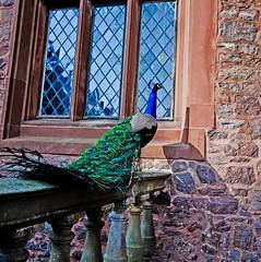 _DSC1747 (Martin David Photography) Tags: david castle wales photoshop community nikon group adobe elements powys nikon photography martin photo castle community d7000 shropshire pse9 d7000 powys