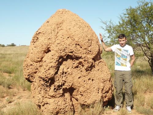 Termite hill near Exmouth, WA
