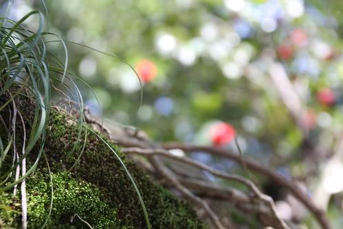 苔むす垣と奥の椿