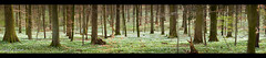 spring is alive - III (Ralph Oechsle) Tags: panorama green spring dof blossoms alive