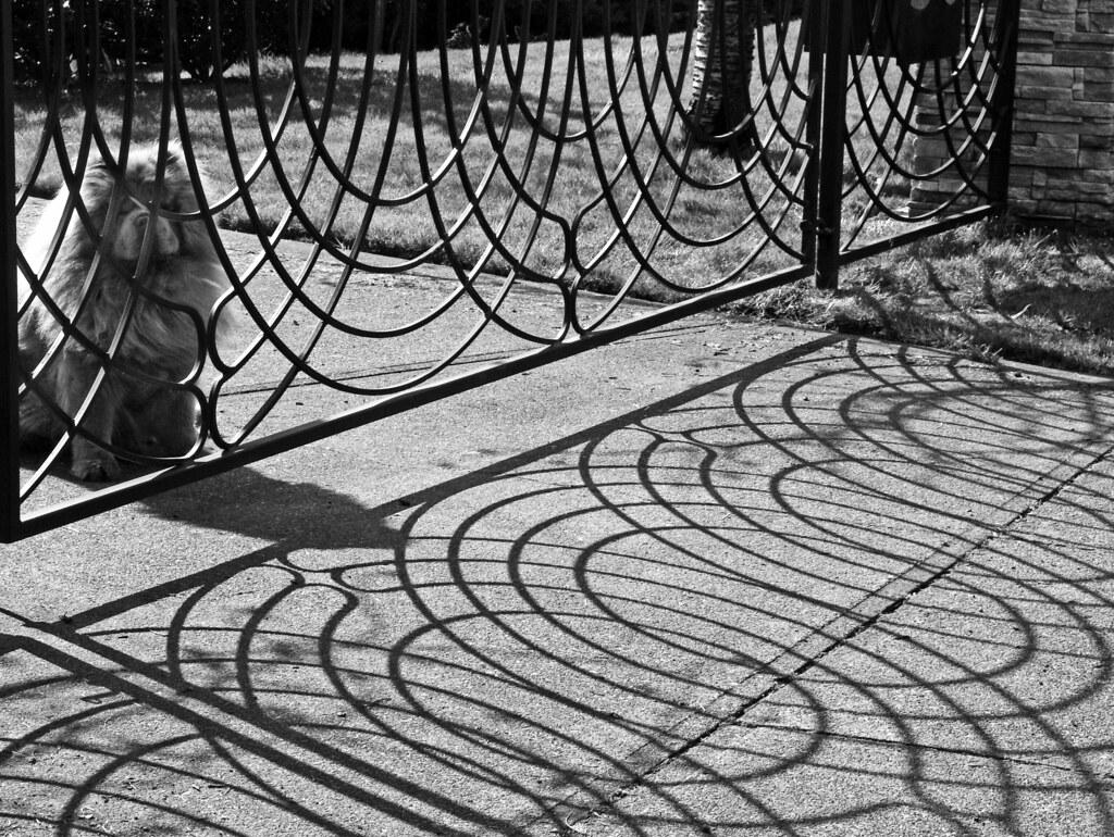 Chow keeps eye on shadow fence