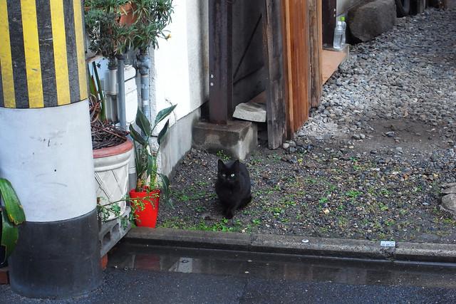 Today's Cat@2011-04-21