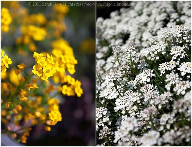 Collage fiori 5edited