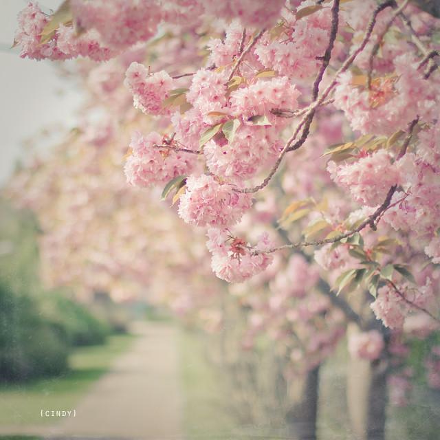 a spring walk