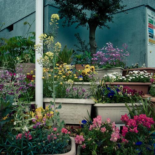 Terraced Flower Garden, Minami Kasai