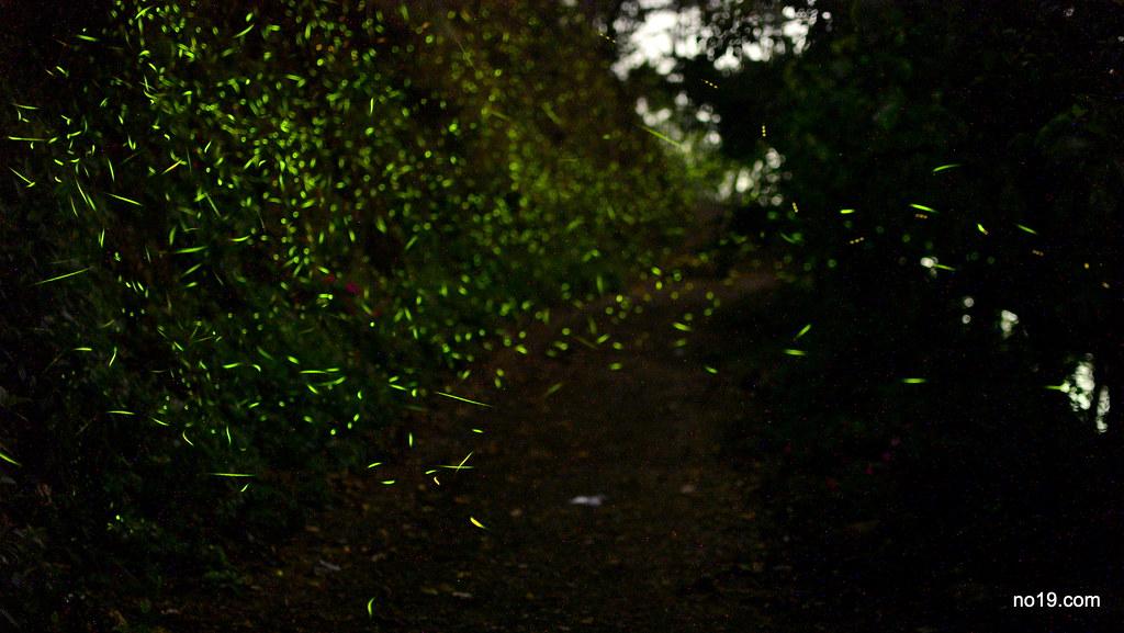 Garden of Firefly - DSC_2307
