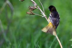 bird 091