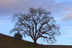 Southern California Malibu Nature & Landscapes (45SURF Hero's Odyssey Mythology Landscapes & Godde) Tags: california nature beautiful beauty landscape landscapes natural malibu socal land scape