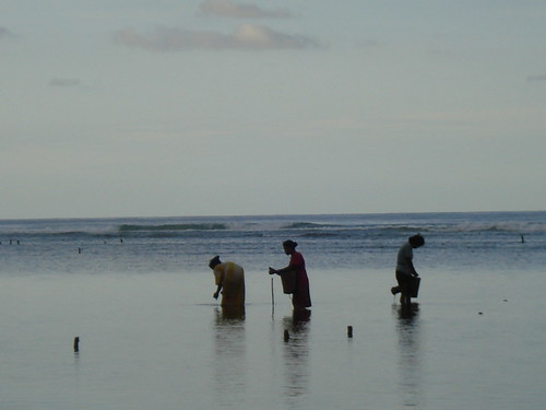 Alor Island - Womans collecting seaurchings for diner