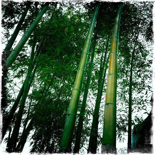 Be like bamboo my friend