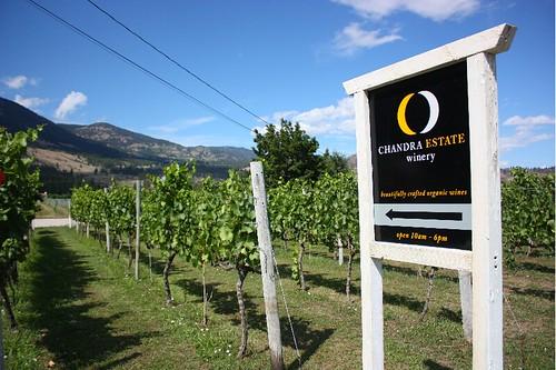 chandra estate winery