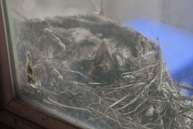 birds.1099