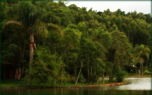GREEN in BRAZIL