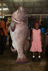 Big grouper (tobycatlin) Tags: fish girl tobago grouper castra