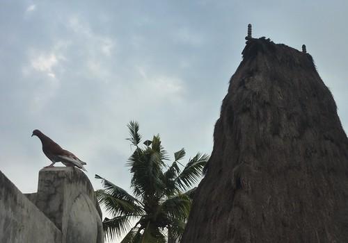 Sumba ouest-Waikabukak-Praiijing-village (13)