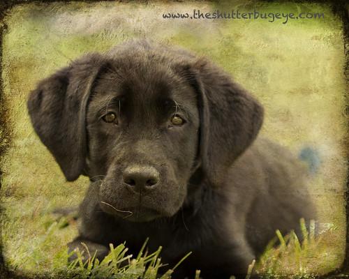 Spectator puppy by The Shutterbug Eye™