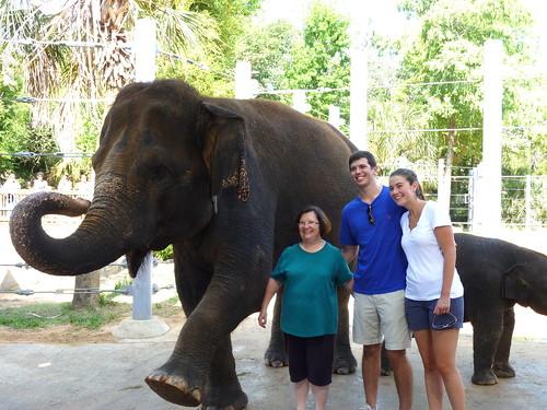 Elephant Open House