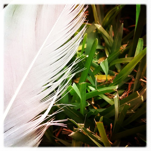 5/365- Feather by elineart