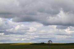 clouds and the canola paddocks_8398 (gervo1865_2 - LJ Gervasoni) Tags: country landscape pyrenees hwy between carisbrook newstead canola farming paddocks victoria australia 2016