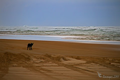 searching by cher (Cher (Ross and Cher)) Tags: sands coloured rainbowbeach teewah rossandcher rcimages