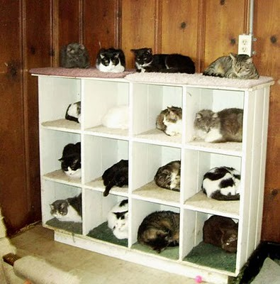 organize_your_cats_15