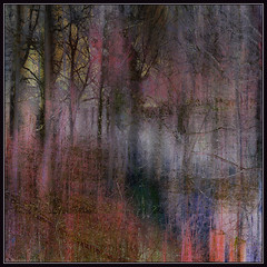 Spring Mist (Tim Noonan) Tags: trees shadow red mist blur colour art digital fore