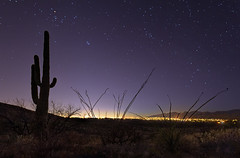 Tucson City Lights from Saguaro National Park (Fort Photo) Tags: park city arizona cactus sky nature silhouette night cacti dark stars lights star nationalpark nikon bravo skies nightscape tucson nps az pima national astrophotography astronomy bluehour saguaro saguaronationalpark lightpollution starscape widefield nikon1735 d700