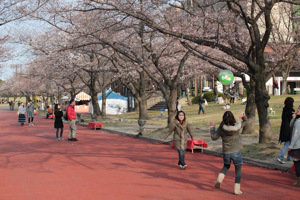 Beginning of Hanami in Banpaku, Osaka