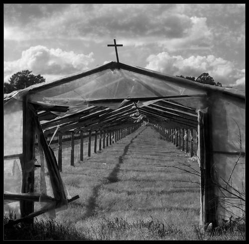 Invernadero con cruz