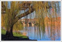 Rideau (Yvan l'07) Tags: france nature pont toulouse paysage arbre garonne printemps latuile flickrunitedaward